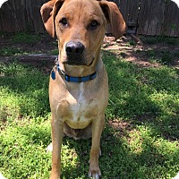 Adopt A Pet :: Cooper - oklahoma city, OK