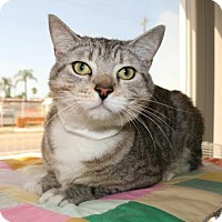 Adopt A Pet :: Mickey - Bradenton, FL