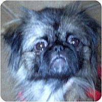 Adopt A Pet :: Pippa-NJ - Mays Landing, NJ