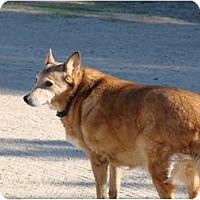 Adopt A Pet :: Scooter - Chandler, AZ