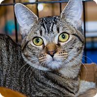 Adopt A Pet :: Tracie - Irvine, CA