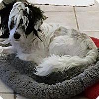 Adopt A Pet :: DALTON - Riverside, CA