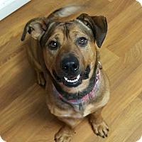 Adopt A Pet :: Shorty McMaxter - Lisbon, OH
