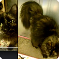 Adopt A Pet :: JAZZY - Northfield, OH