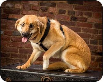 Shepherd (Unknown Type) Mix Dog for adoption in Owensboro, Kentucky - Ruby