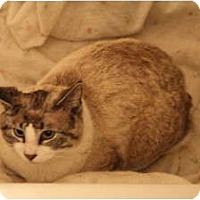 Adopt A Pet :: *Nubbins - Winder, GA