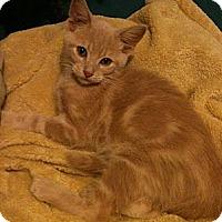 Adopt A Pet :: Lyle - Sterling Hgts, MI