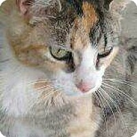 Adopt A Pet :: Jellybean - Modesto, CA