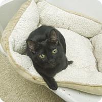 Adopt A Pet :: Omaha - Medina, OH