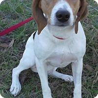 Adopt A Pet :: Sally - Tampa, FL