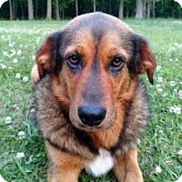 Adopt A Pet :: Sissy - Loxahatchee, FL