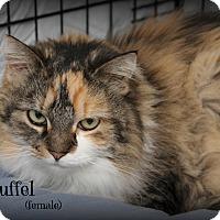 Adopt A Pet :: Truffel - Glen Mills, PA