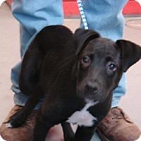Adopt A Pet :: Tootsie - Aurora, IL