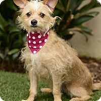Adopt A Pet :: Honey - Rancho Palos Verdes, CA