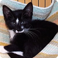 Adopt A Pet :: Rubble - Grants Pass, OR