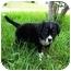 Photo 3 - Australian Shepherd Mix Puppy for adoption in Orlando, Florida - Danny