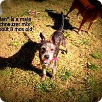 Adopt A Pet :: Han - Gadsden, AL