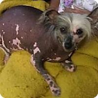 Adopt A Pet :: Tia (MI) - Gilford, NH