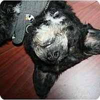 Adopt A Pet :: Peppy - Pending - Vancouver, BC