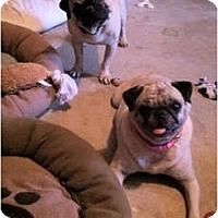 Adopt A Pet :: Rudy - Windermere, FL