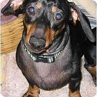 Adopt A Pet :: Hansel - Portland, OR