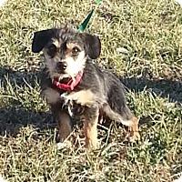 Adopt A Pet :: Finnigan - Brattleboro, VT