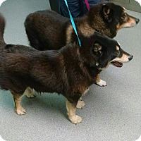 Adopt A Pet :: Rambo and Lady (courtesy listi - Richmond, VA