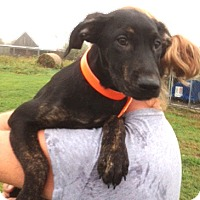 Adopt A Pet :: Bree - Medora, IN