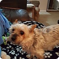 Adopt A Pet :: Sammi Jo - Indianapolis, IN