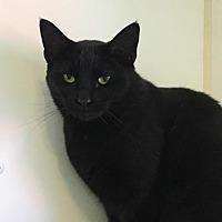 Adopt A Pet :: angel face - Bourbonnais, IL