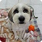 Adopt A Pet :: Achu