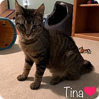 Adopt A Pet :: Tina - Sterling Hgts, MI