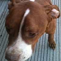 Adopt A Pet :: Gumbo - Madisonville, LA