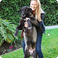 Adopt A Pet :: Holliday - Marina del Rey, CA