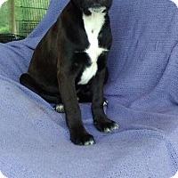 Adopt A Pet :: Knile meet me 4/21 - Manchester, CT