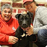 Adopt A Pet :: Moxie - Elyria, OH