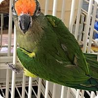 Adopt A Pet :: PJ - Punta Gorda, FL