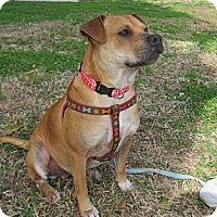 Adopt A Pet :: Maya - Kingwood, TX