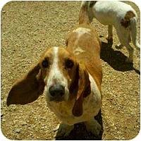 Adopt A Pet :: Bart - Acton, CA