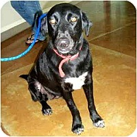 Adopt A Pet :: Dani California - Scottsdale, AZ