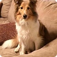 Adopt A Pet :: Samantha - Abingdon, MD