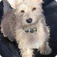 Adopt A Pet :: Tucker - Yuba City, CA