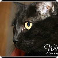 Adopt A Pet :: Winnie - Cumbeland, MD