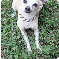 Adopt A Pet :: Qui - Wallingford Area, CT