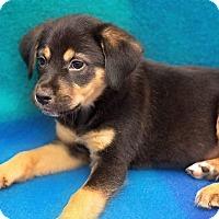 Adopt A Pet :: Clement - Millersville, MD