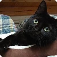 Adopt A Pet :: VIXEN - Dallas, TX