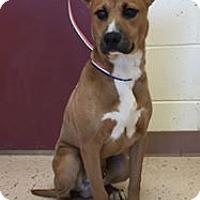 Adopt A Pet :: Lynyrd - McDonough, GA