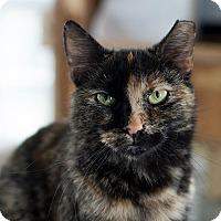 Adopt A Pet :: Chloe - Unionville, PA