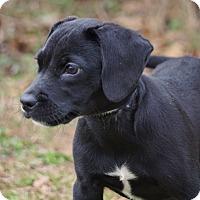 Adopt A Pet :: Maisy - Westport, CT
