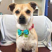 Adopt A Pet :: Binks - Visalia, CA